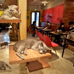 Cat Cafes Are the New Cat's Meow