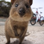 The Best Places to Find the Cutest Animals