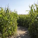 Corn Mazes That Will Amaze