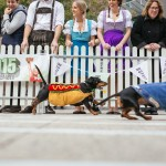 Yes, Melbourne Hosted Its First Dachshund Race