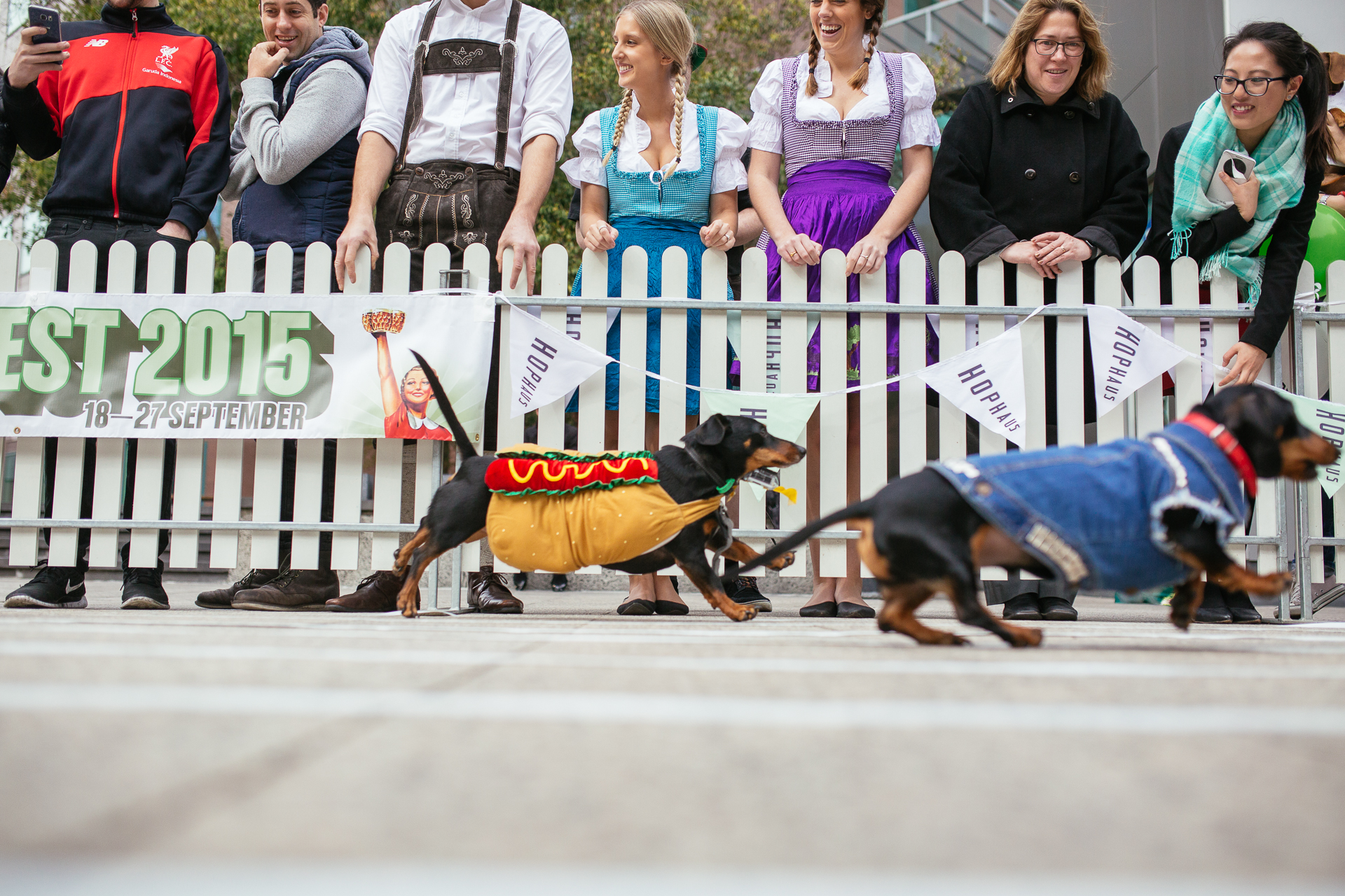 Doxie Race