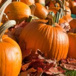 Pumpkin Patches in Seattle
