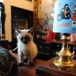 Bristol's Cat Pub