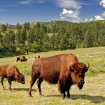 South Dakota's Custer State Park