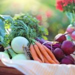 Planning to Volunteer at an Organic Farm: What You Must Know