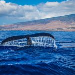 Whale Watching Tour: Here's Why You Should Give It a Try