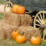 Top Fall Destinations in the United States